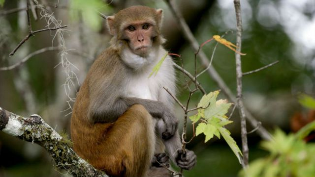 Don't kiss monkeys in Florida, they could give you herpes