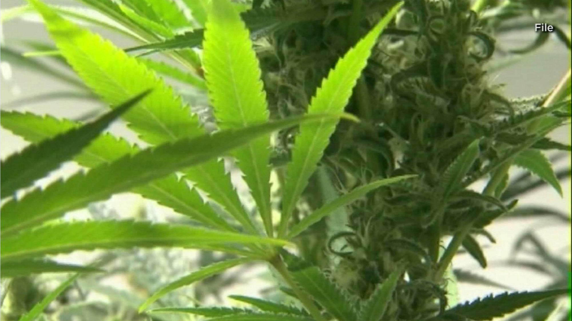 Smokable Medical Marijuana Bill Passes Florida Legislature
