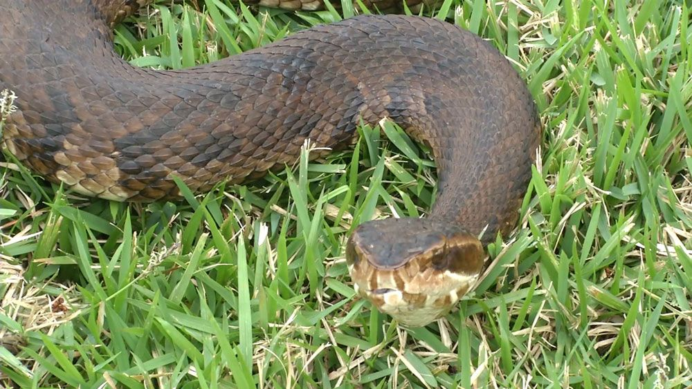 Seeing More Snakes? Spring Brings Them Out; 5 Things to Know