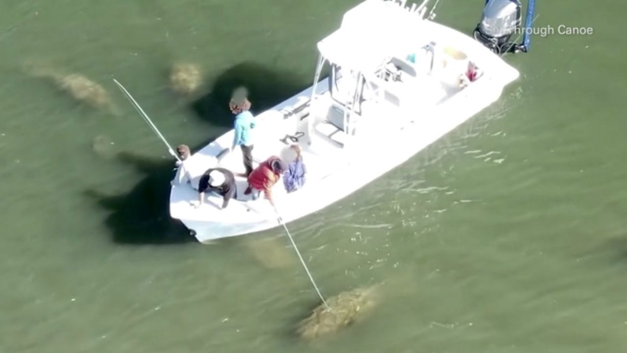 Drone Captures Video of Pinellas Boater Touching a Manatee