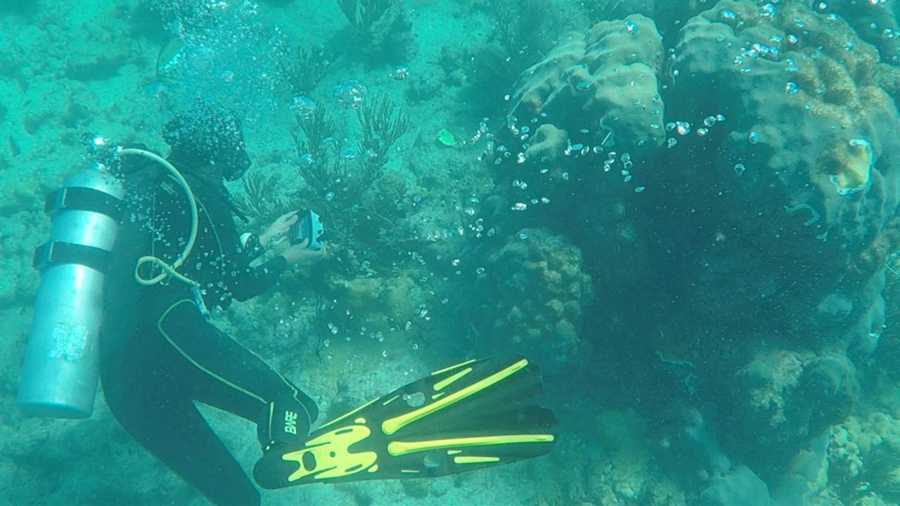 Research assistant Emily Hower takes a photo of diseased coral. (Samantha-Jo Roth/Spectrum News)