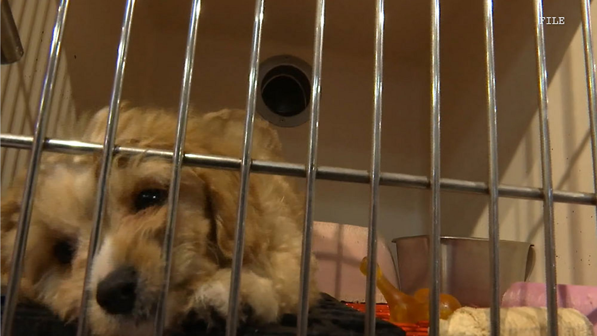 Brevards Puppy Sales Ordinance Will Go To Public Hearing