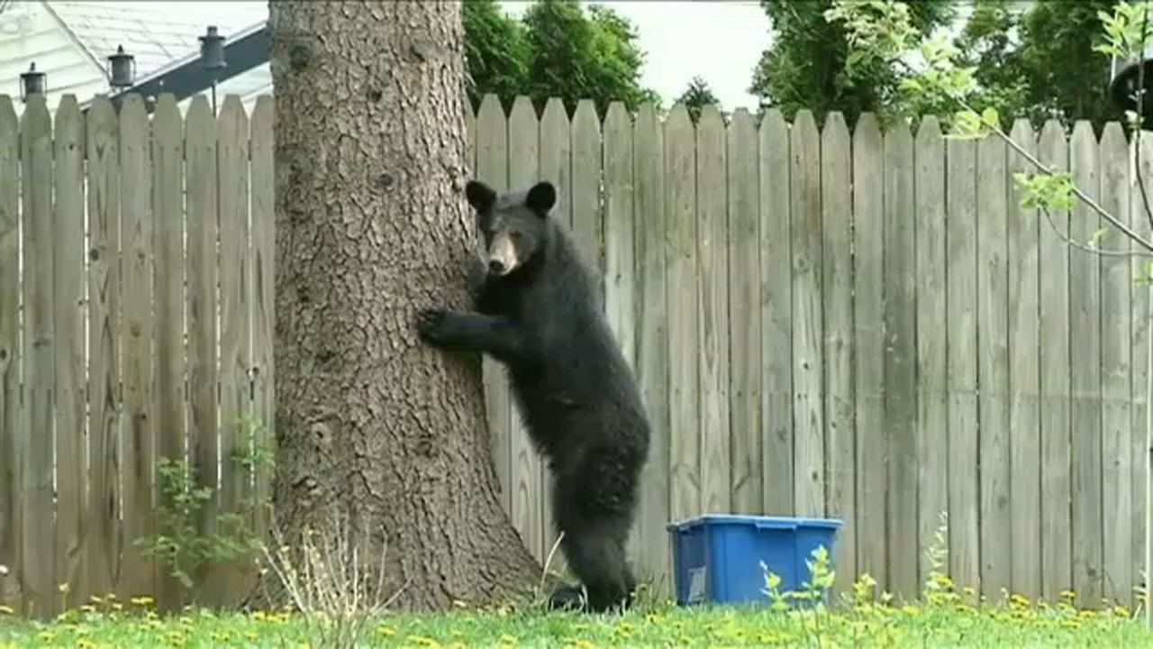 With Fall Nearly Here, be on The Lookout For Bears