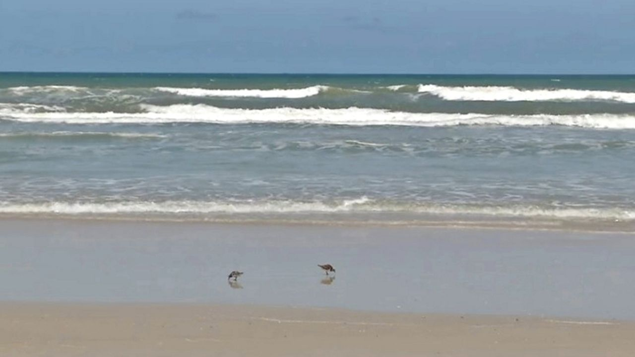 Man Drowns In Rip Cur At New Smyrna