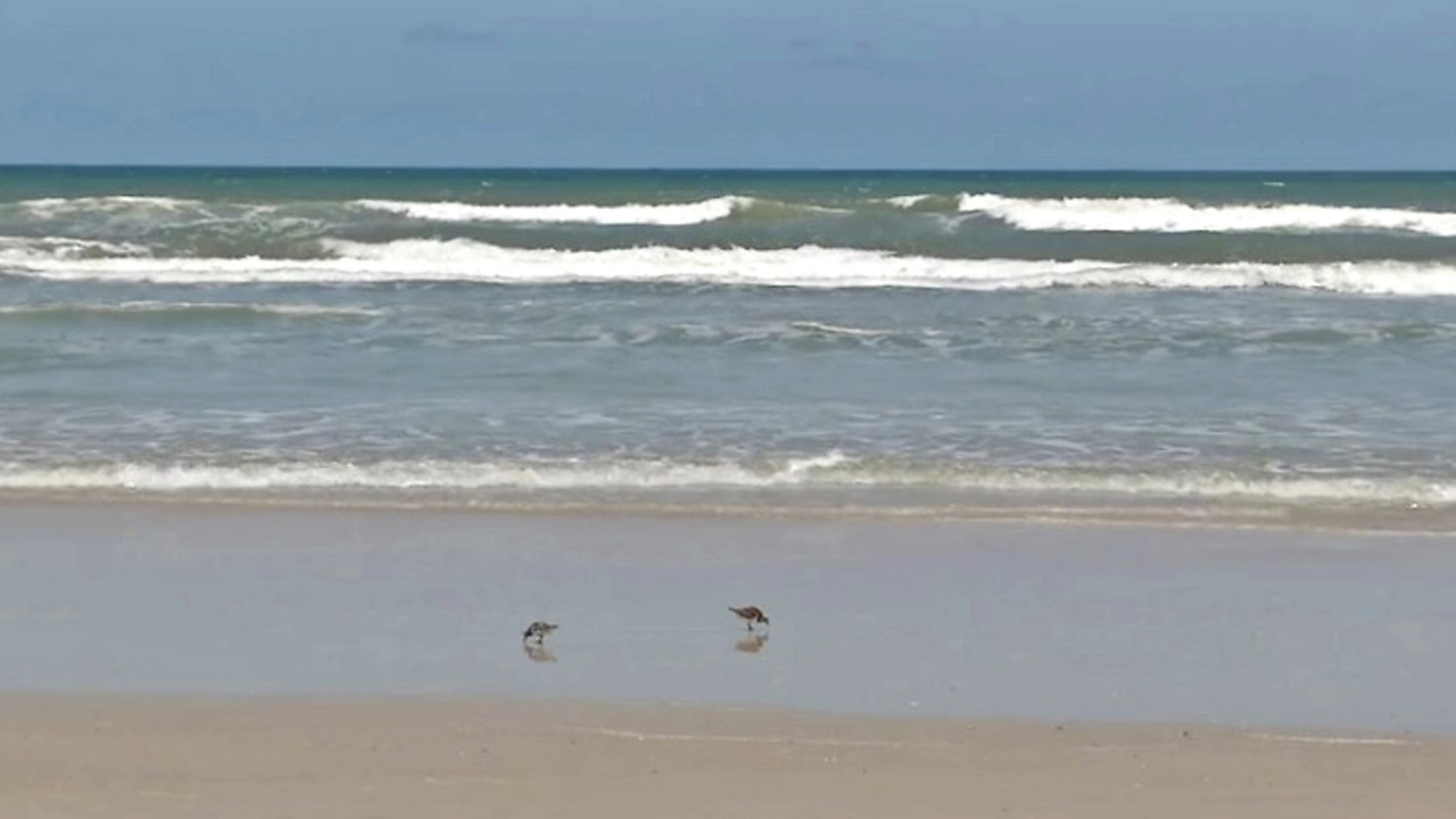 New Symrna Beach >> Surfer Bitten By Shark In New Smyrna Beach