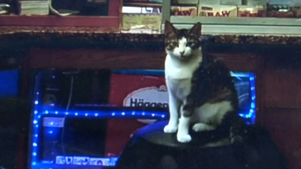 NYC Bodega Workers Seek Helping Finding Beloved Cat They Say Was Stolen