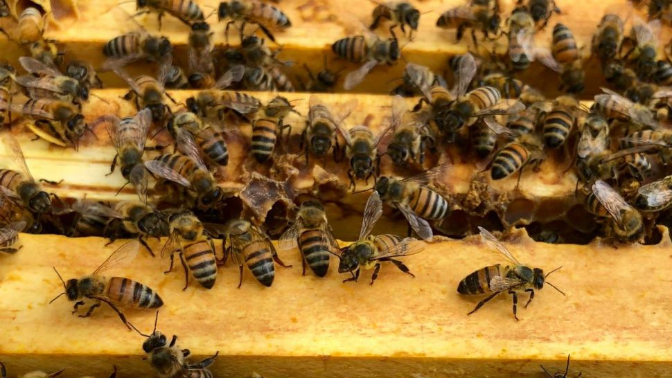 Petition Calls for Law to Protect Bees from Pesticides