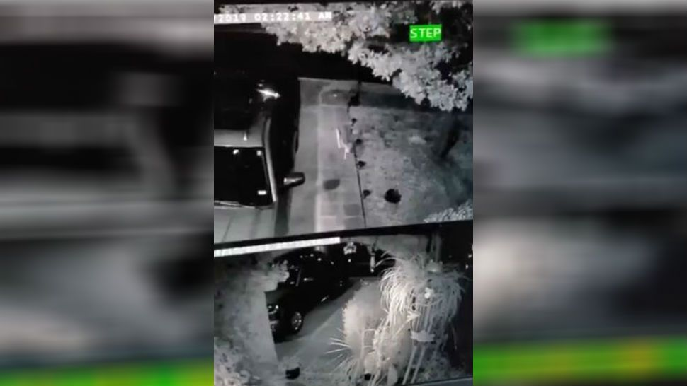 VIDEO: Coyote Caught Snatching Cat From North Austin Yard