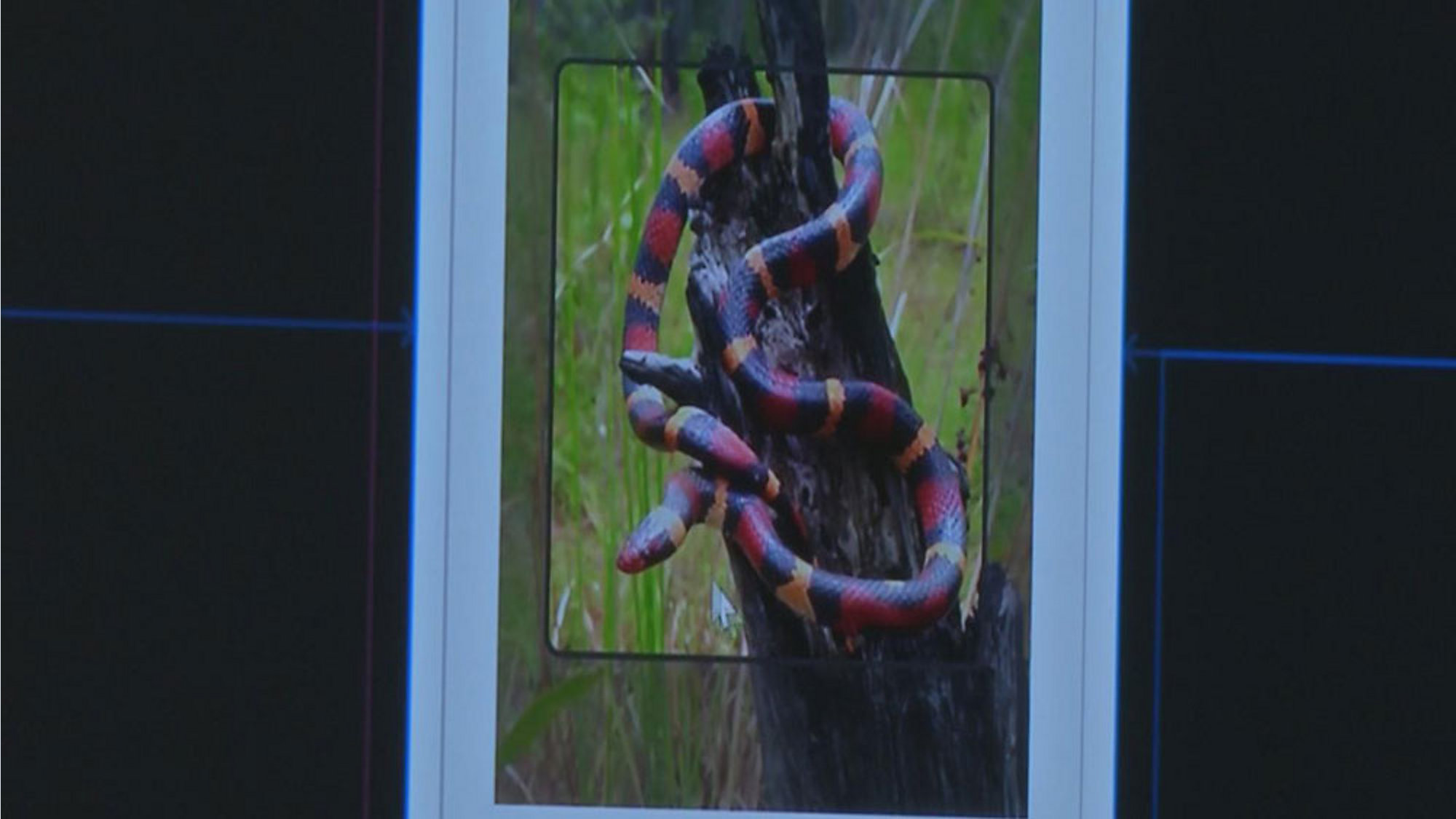 Snake in Your Yard? New Snake Snap App Helps You ID Them