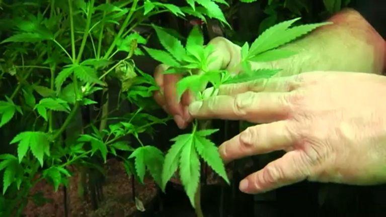 denver weed store