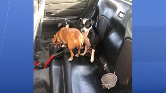 Little Dogs Found Abandoned in St  Petersburg