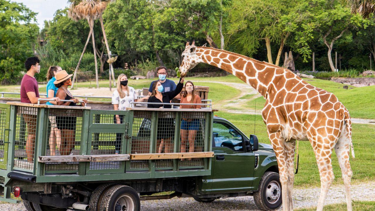 0702 bn9 busch gardens safari tour masks - Is Busch Gardens Busy On Easter Sunday