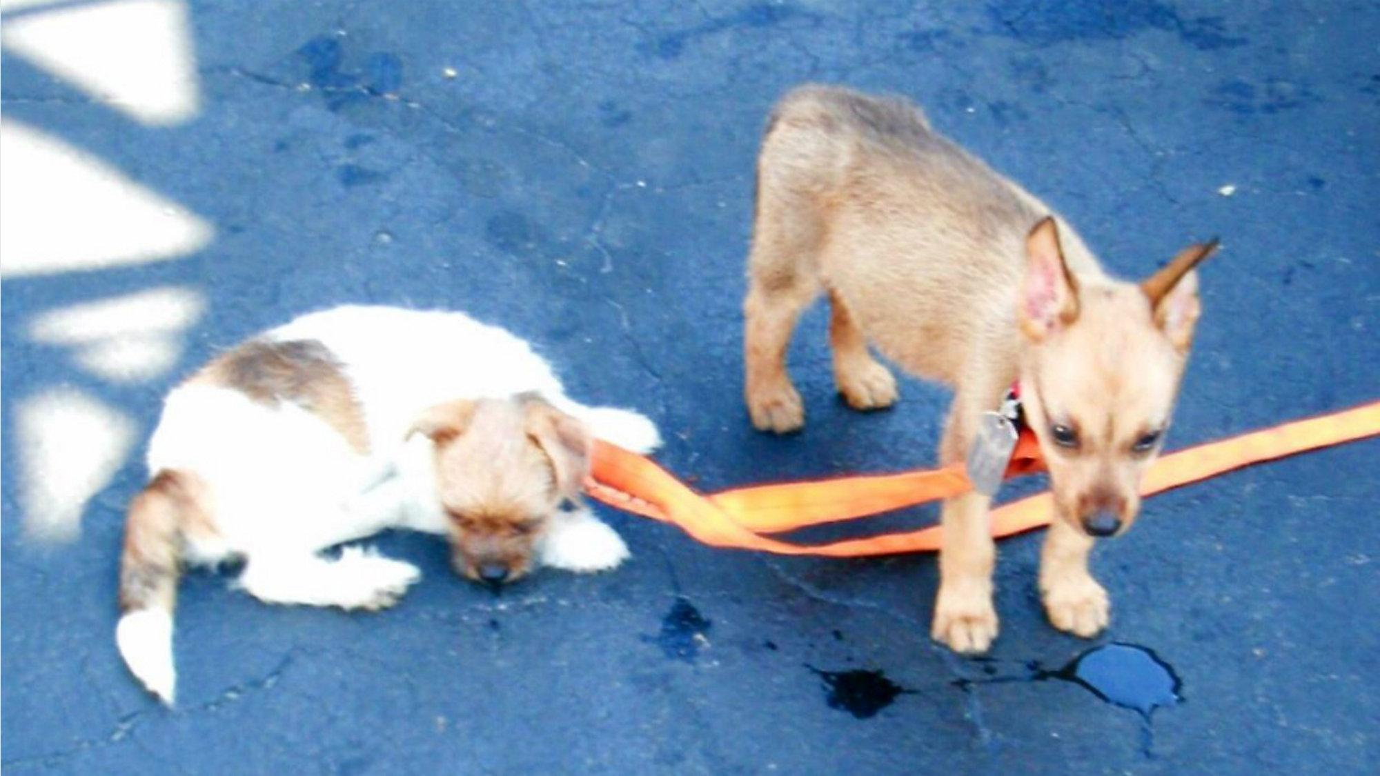 Puppies Die After Being Left In Hot Car In Hotel Parking Lot