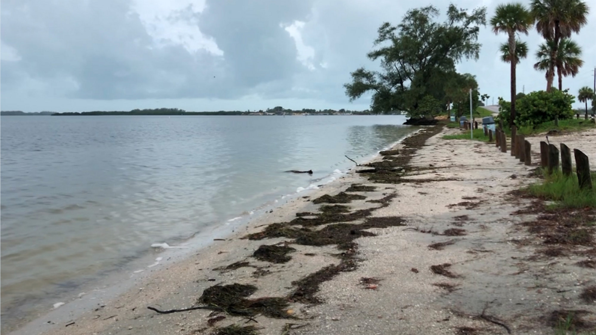 Manatee County Beach Contaminated With Fecal Bacteria
