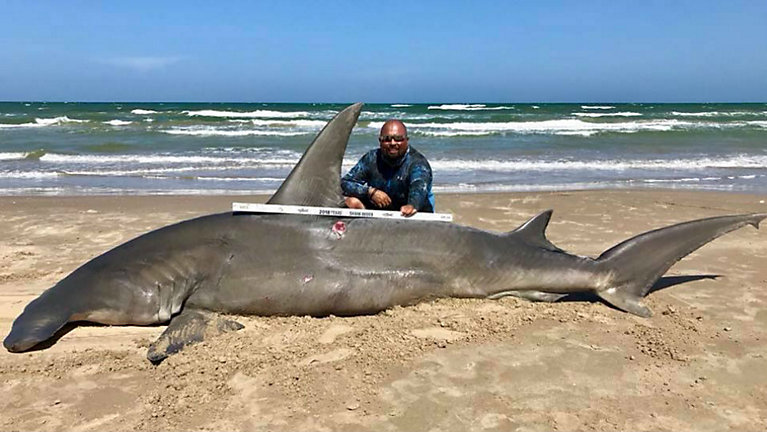 Fisherman catches 14 foot hammerhead shark off padre island fisherman catches 14 foot hammerhead shark off texas coast courtesy south texas altavistaventures Image collections