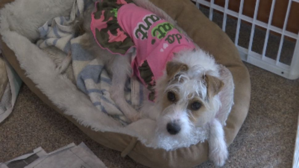 Sanford is the latest city to ban sales of animals bred at facilities often referred to as puppy mills.