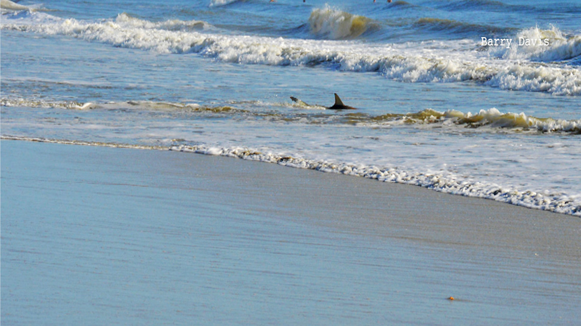3 Shark Bites Reported At New Smyrna Beach In Past 2 Weeks
