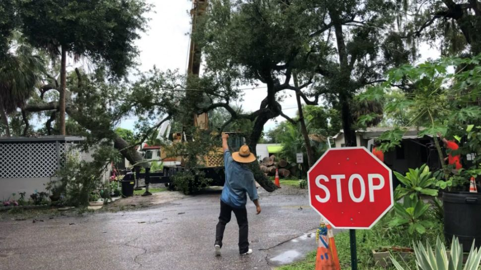 Fallen Manatee County Tree Finally Picked Up From Homes