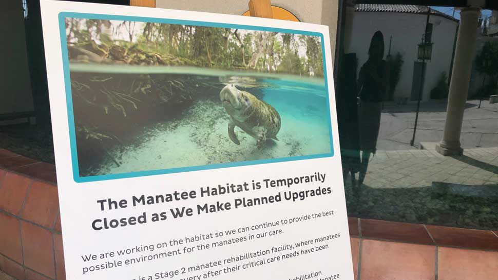 Manatees Being Cared For in Manatee County Moving Out For Now