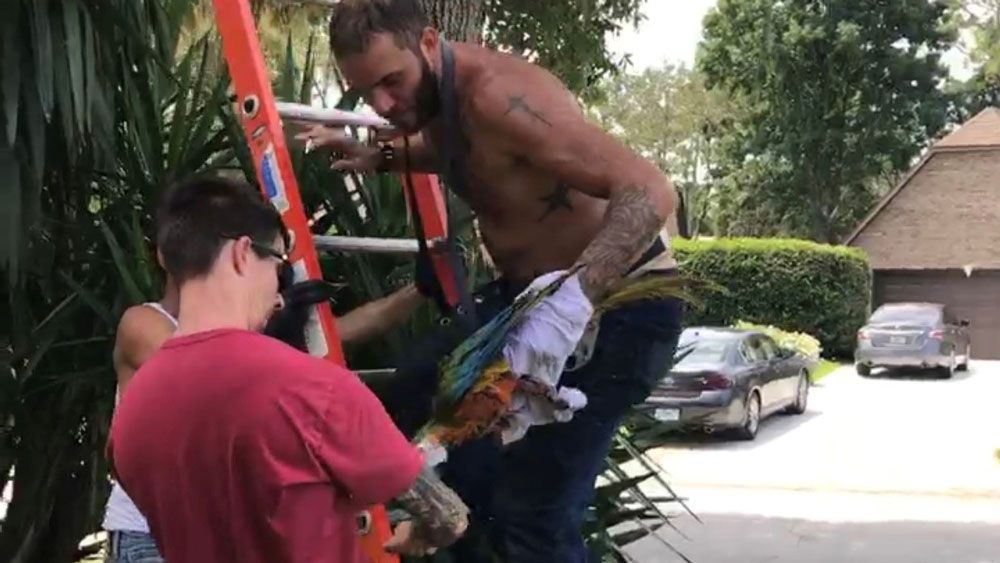 To get Kona off the tree, workers from Bridges Brothers Property Preservation had to climb a 40 foot ladder and an additional 20 feet of tree, then cover Kona with a t-shirt so they could grab him and come down. (DanieLynn D'Ambrosio)