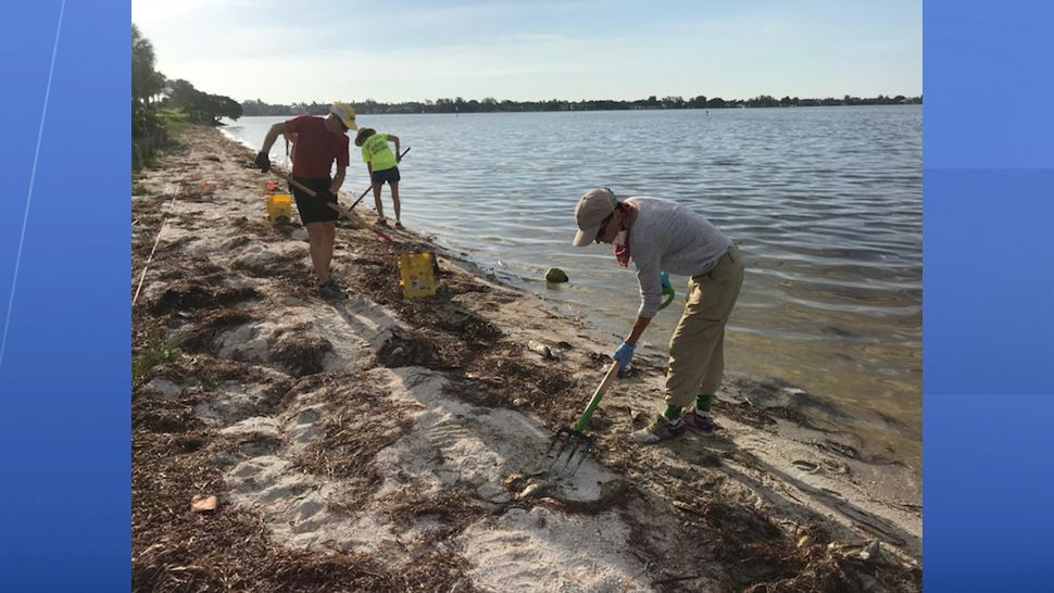 Volunteers lend a hand Wednesday morning in clean up efforts on the Palma Sol Causeway. (Fallon Silcox, staff)