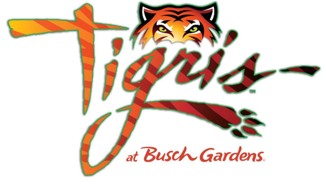 Tigris, a new roller coaster, is coming to Busch Gardens in Spring 2019. (Busch Gardens)