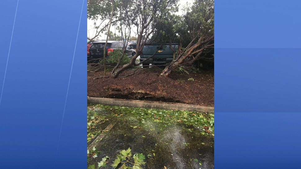 Uprooted trees in Wilmington from Hurricane Florence. (Lauren Verno, staff)