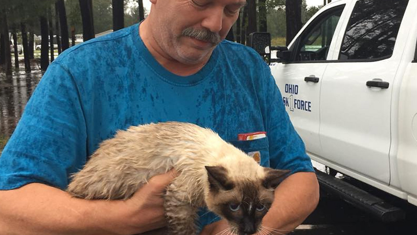 Rescue Group Saves Cat From Flood Waters