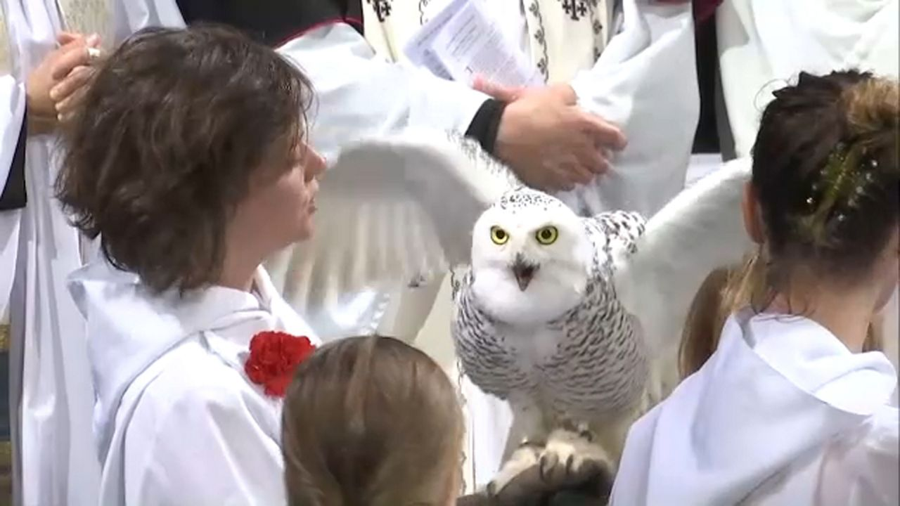 Birds, Reptiles, Horses Join NYC Church for Annual Blessing