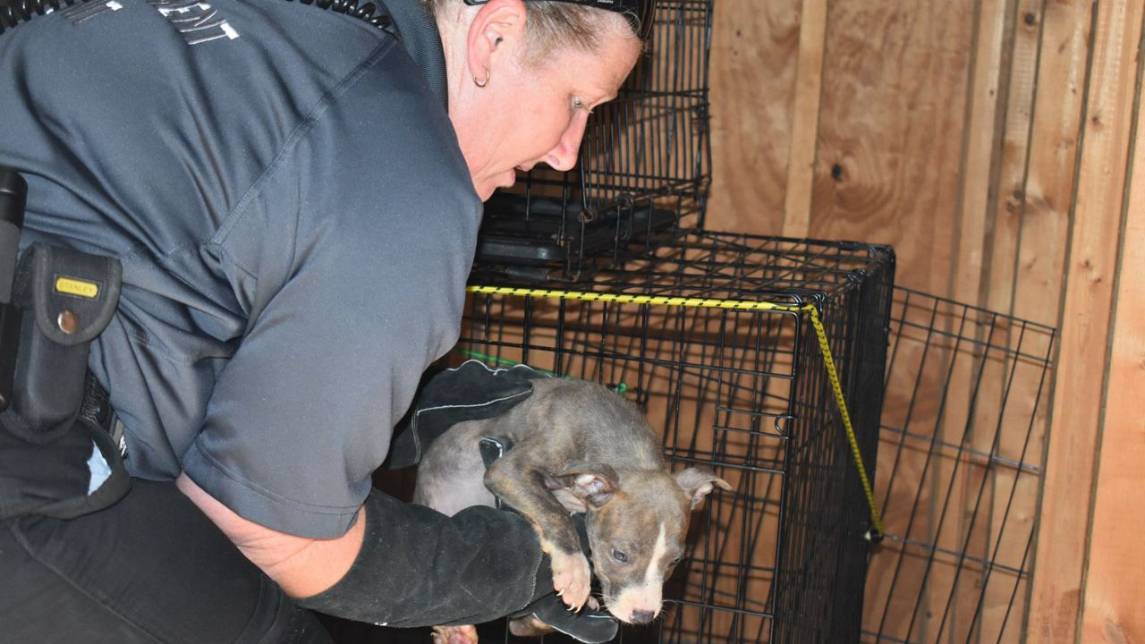 Seven dogs were found abandoned in a storage unit in Brooksville on Tuesday, October 15. The Hernando County Sheriff's Office is looking for info on the dog's owner.