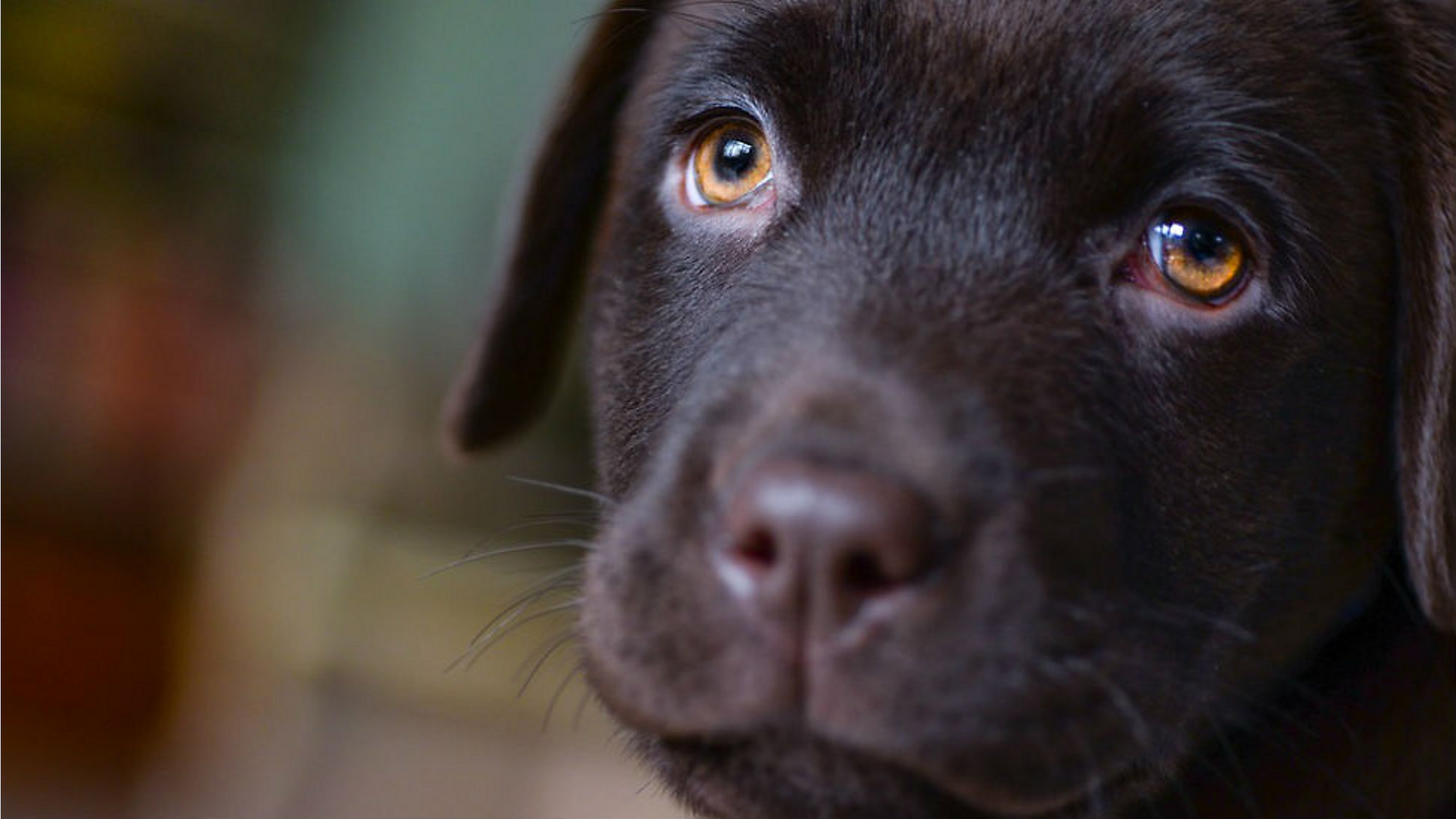 Brevard County Approves Puppy Sales Ordinance