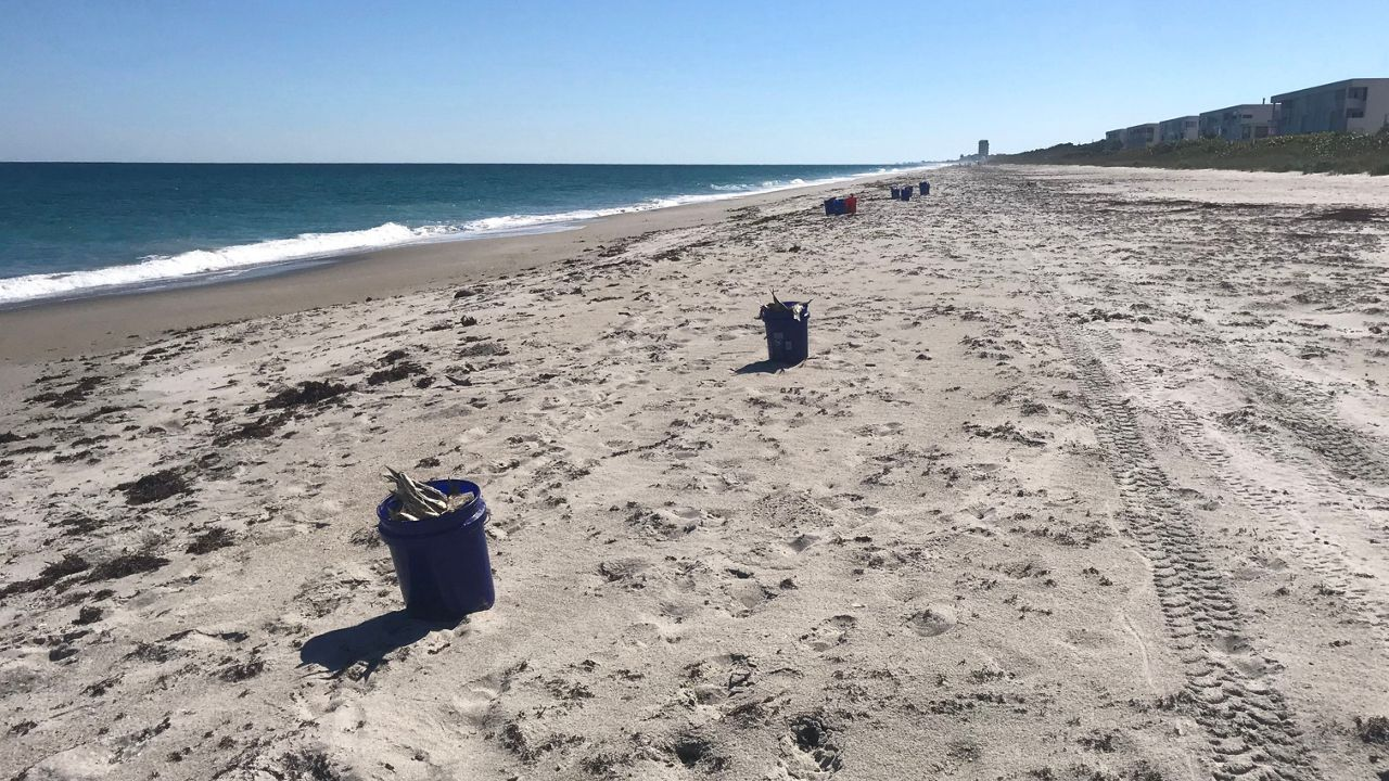 Keep Brevard Beautiful volunteers are cleaning up Brevard County beaches. Thousands of fish are seen for miles across the area's beaches.