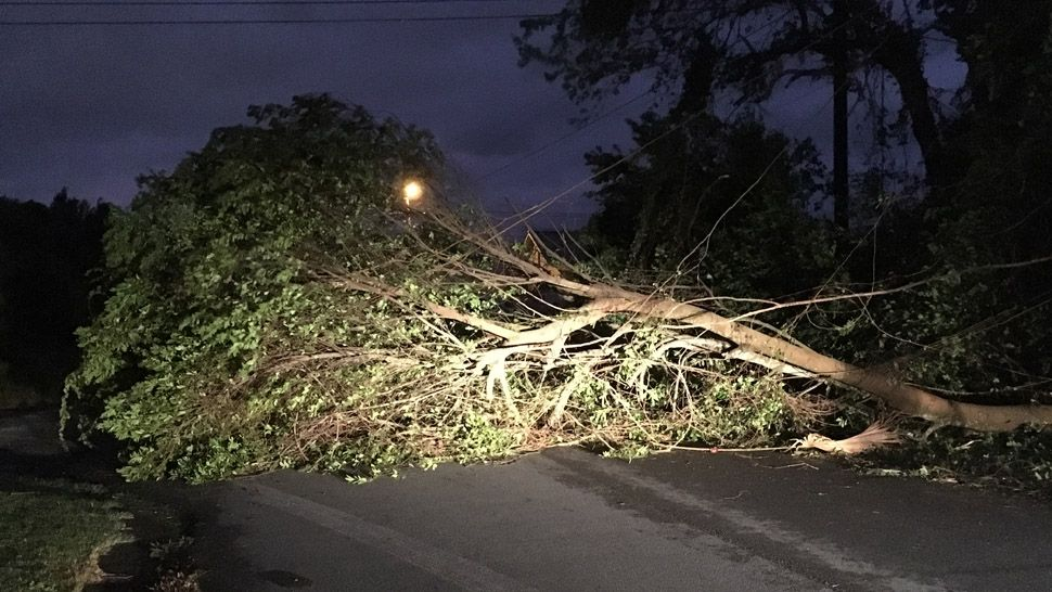 Downed tree blocking road in Bay County
