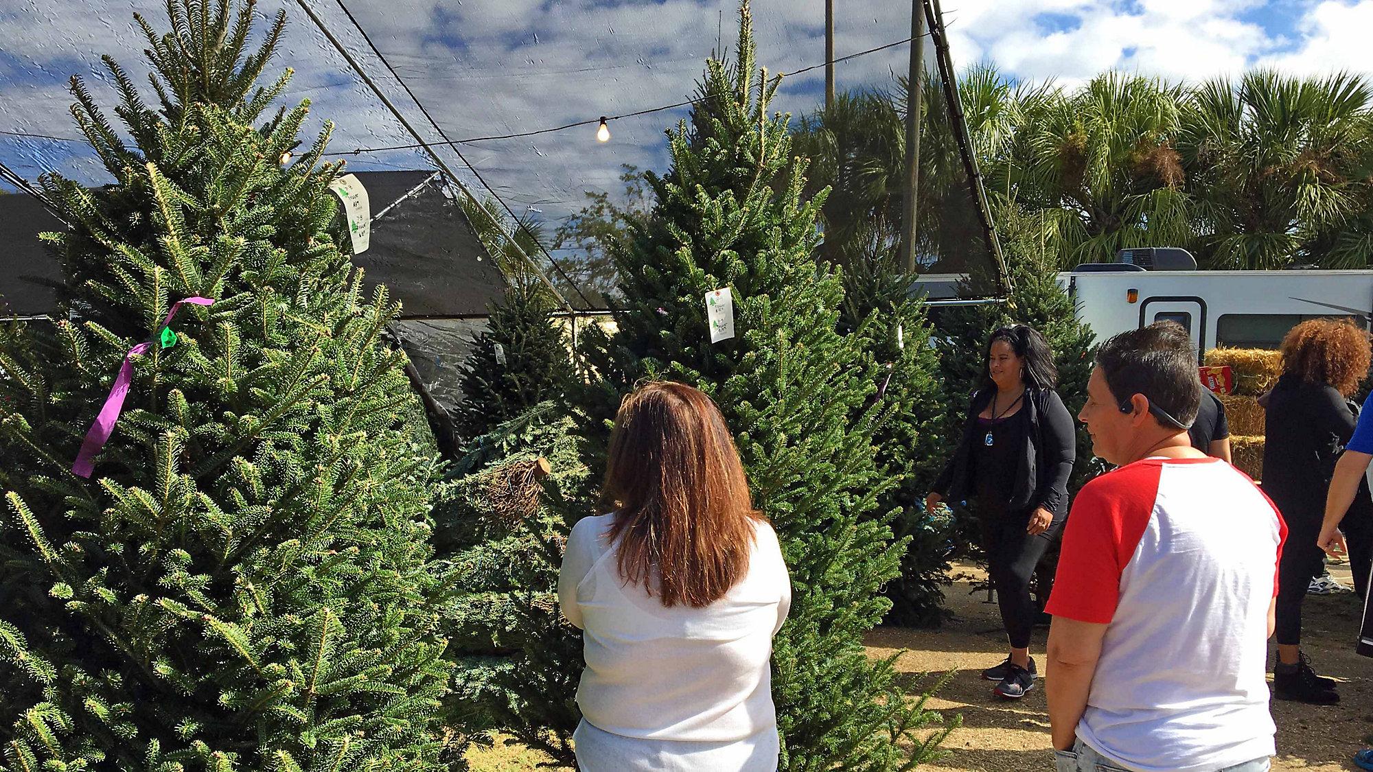 Christmas Tree Back.Christmas Tree Business Makes Comeback After Tornado