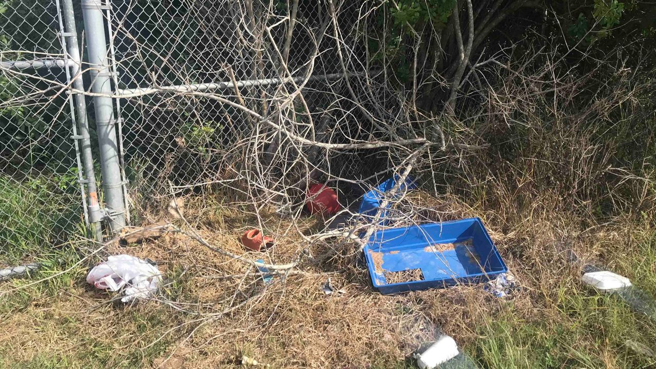 Guinea Pigs were found abandoned near a dead-end road in Melbourne by a fence on Sarno Extension.