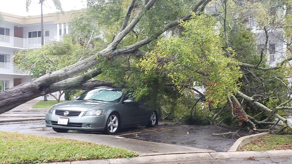 Tree downed on top of vehicle at On Top of the World Communities in Hernando County (Courtesy of Anna, viewer)