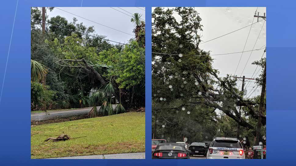 Storm damage along Interbay, around Himes Avenue in Tampa (Courtesy of Michelle Davis)