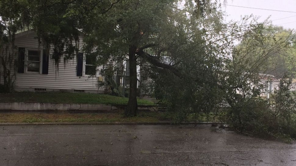 Large broken branch near Freemont in West Tampa (Courtesy of Robin, viewer)