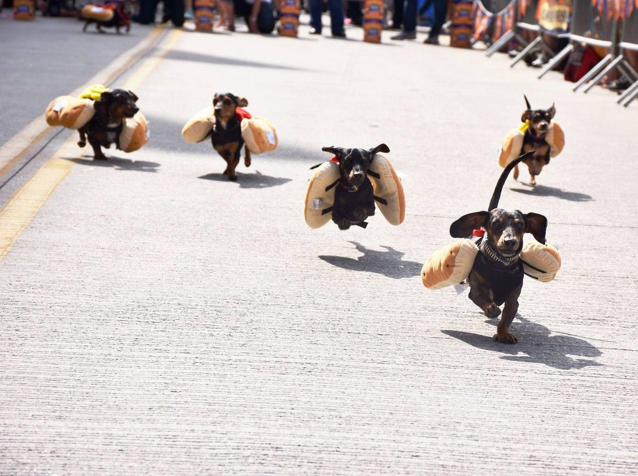 Running of the Wieners at Oktoberfest Zinzinnati (Casey Weldon   Spectrum News 1)