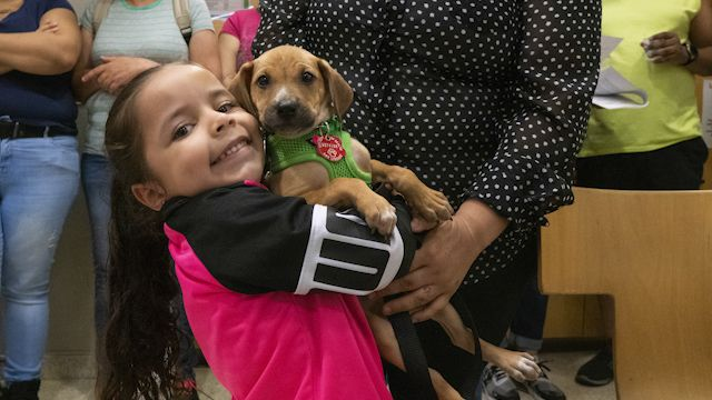 Hundreds Line Up to Clear the Shelters of Pets in NYC