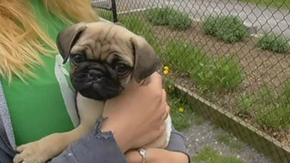 Animal Shelters See Increase in Lost Pets
