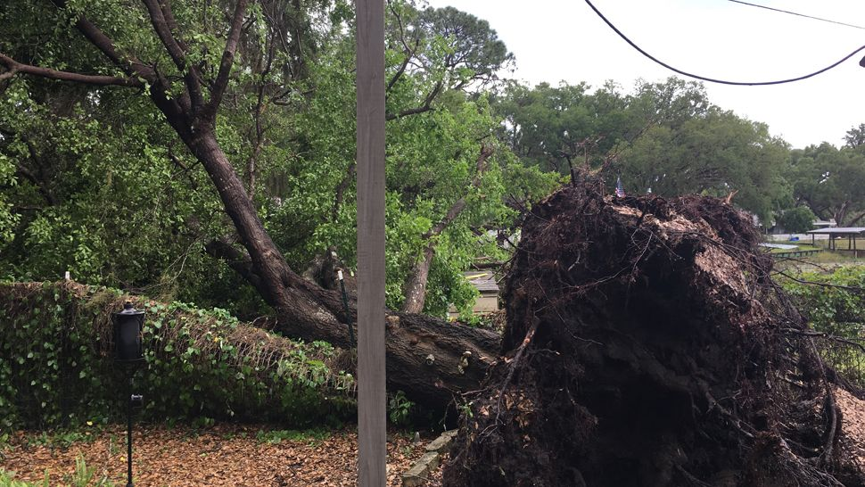Sent via Spectrum News 13 app: A squall takes down a tree (and power) in Salt Springs in Marion County. (Shan Birdsall, Viewer)