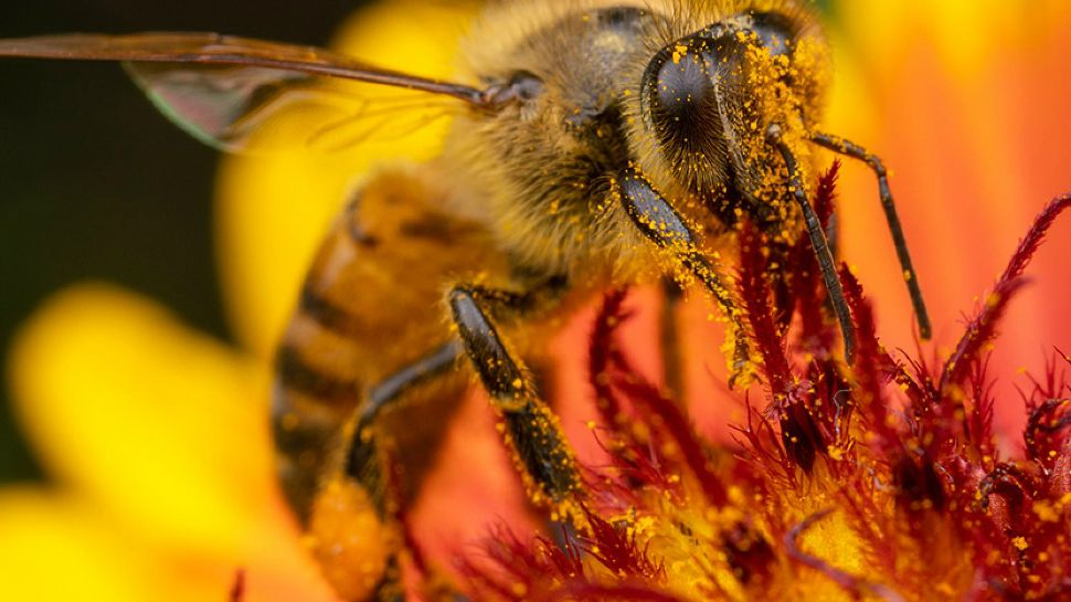 Can Honey Bees Predict The Weather?
