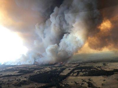"""Image result for koala australia fire imagery"""""""