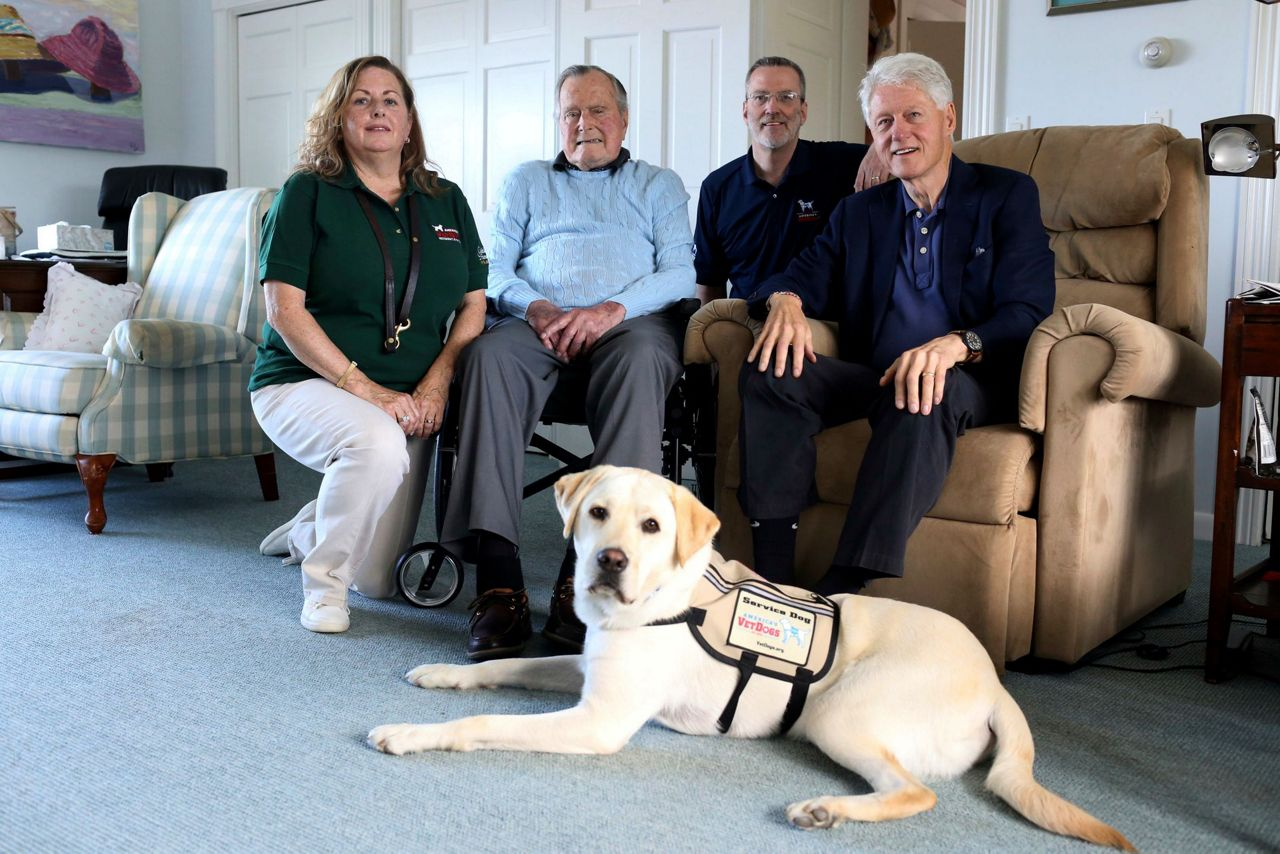 Office Visiting Service Dogs