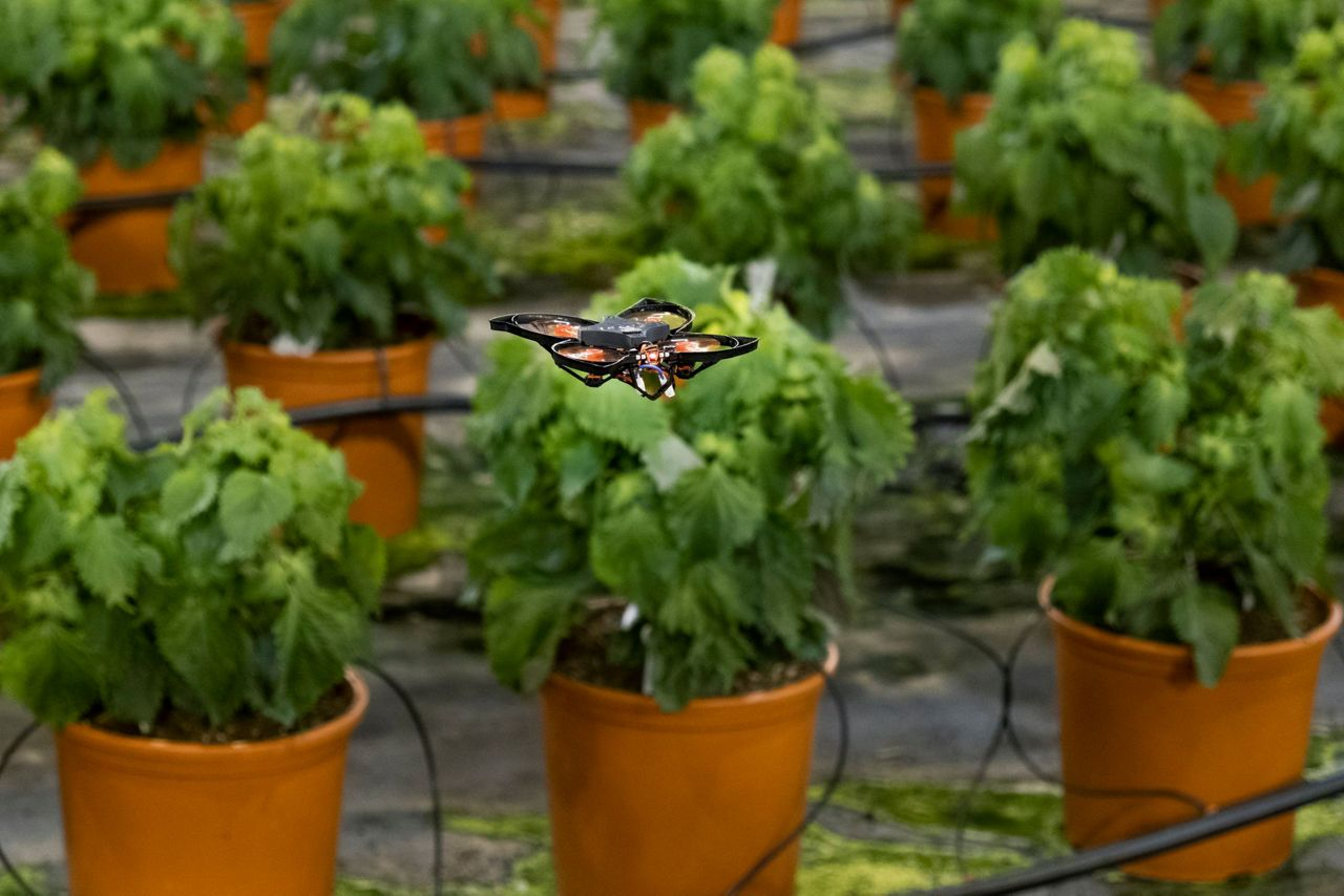 Drones vs moths: Dutch company tech solution to kill moths - Bay News 9