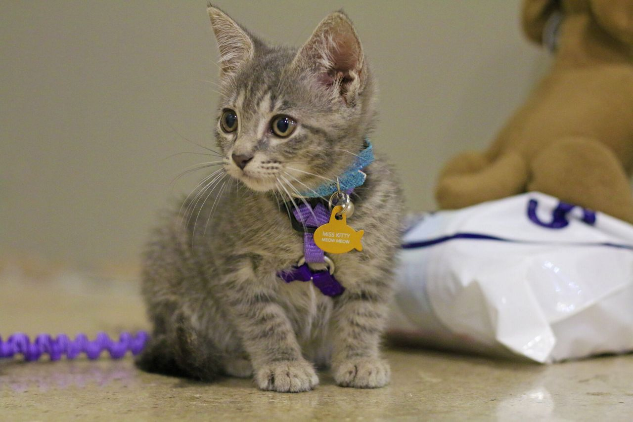 POP Cats makes purrfect debut in Austin