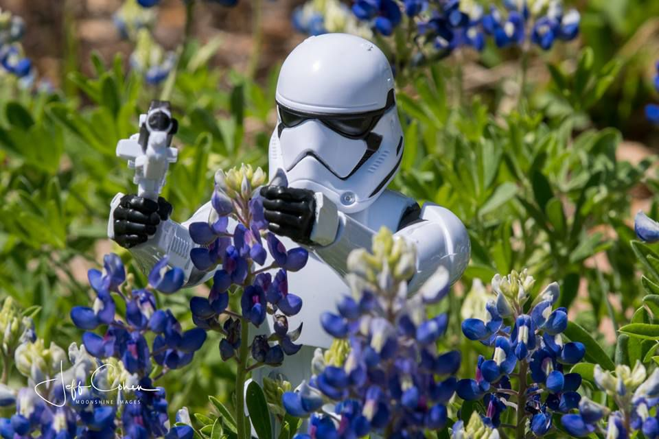 Storm trooper toy in the bluebonnets.