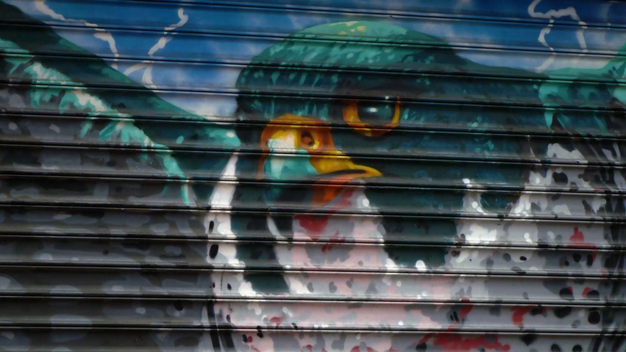 Audubon bird murals