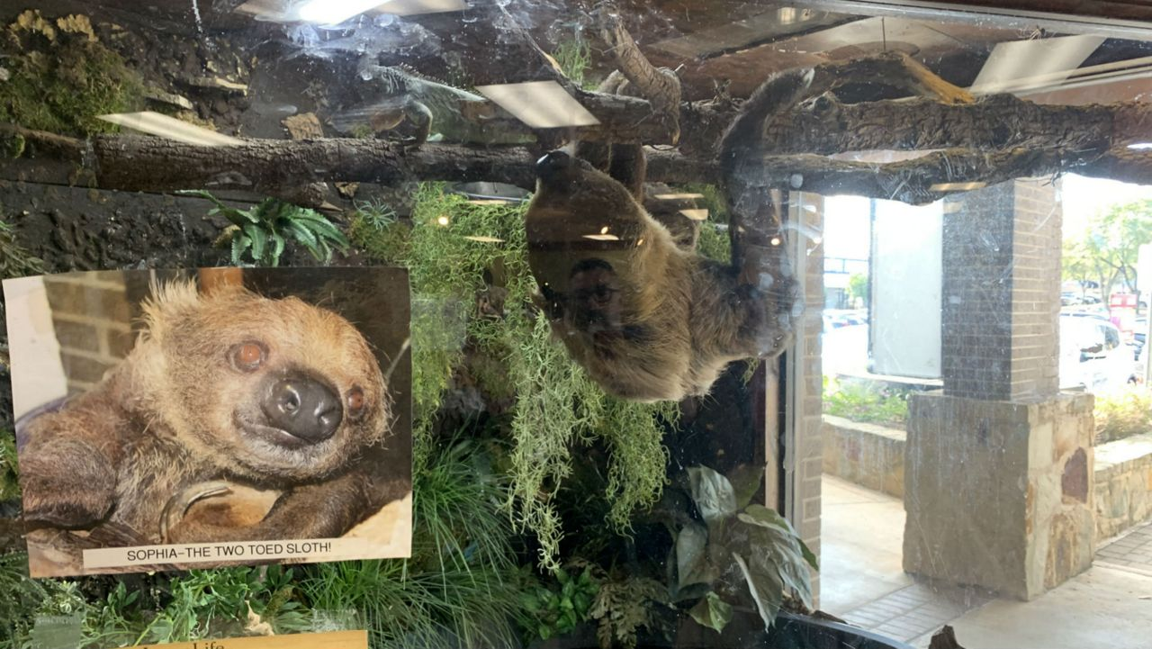 Sloth is the Star of Austin Exotic Pet Store